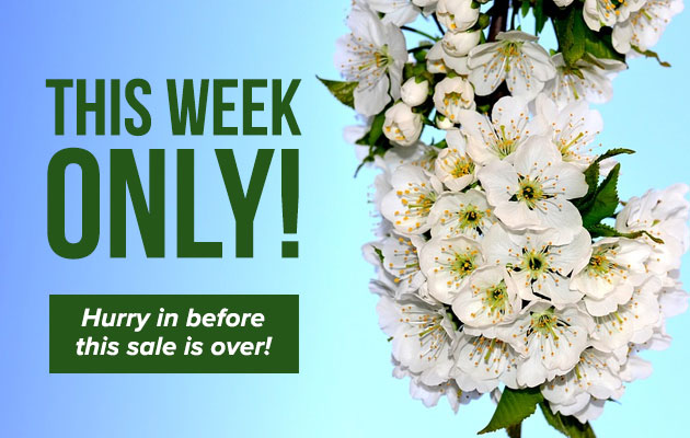 This Week Only Sale